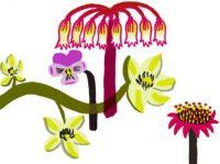 Mirette Affiches pour bébé sur le thème des fleurs développement de la vision de bébé à partir de 3 mois fleurs